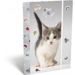 Cicás gumis mappa A/4 Pet Fluff Kitten