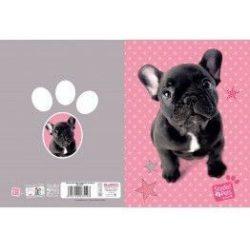 Kutyás füzet A/5, 32 lap kockás, francia bulldog, Paso Studio Pets